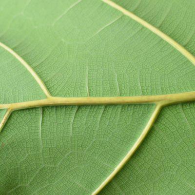 Rebrota tu pyme: inscríbete acá para una Recuperación Verde